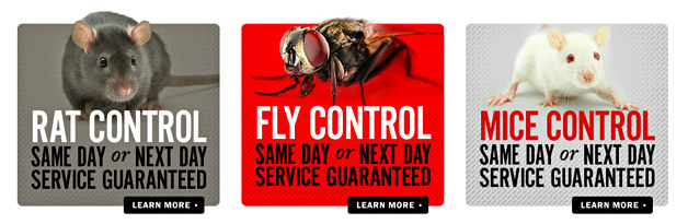 A screenshot of the Direct Pest Control call-to-action advertisements